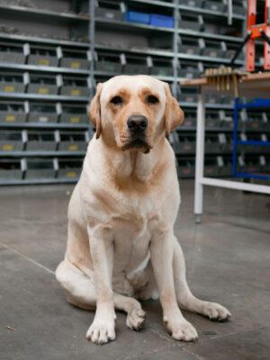 Office-dog_Mae